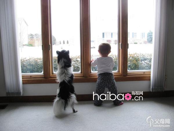 两只萌物携手共赏窗外风景!