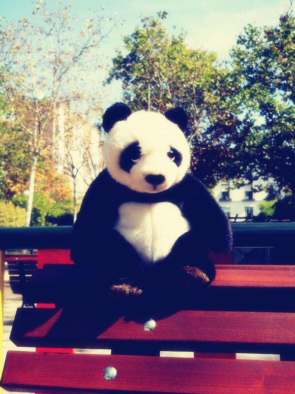 吉祥宝贝 辰辰和小熊猫