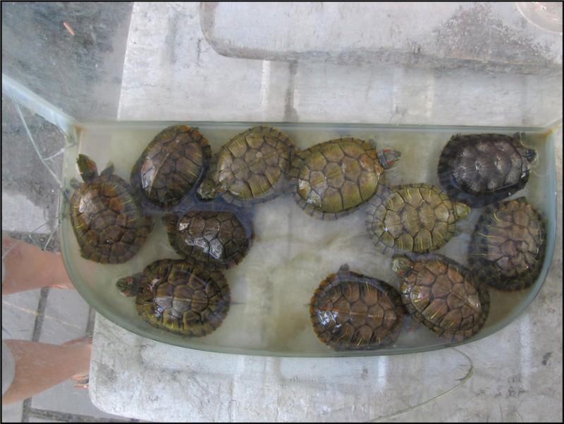 到鱼市买鱼儿,喜欢可爱的小乌龟